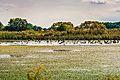 GaenseBlumberger 8 09 19.JPG