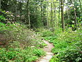 Garden in the Woods - IMG 2455.JPG