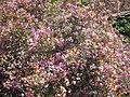 Gardenology-IMG 4732 hunt10mar.jpg