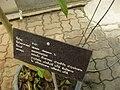 Gardenology.org-IMG 7822 qsbg11mar.jpg