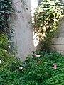 Gardens in Baghdad 38.jpg