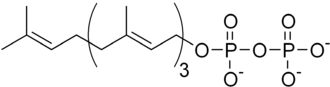Diterpene - Geranylgeranyl pyrophosphate, the starting material for the biosynthesis of diterpenes