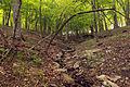 Gfp-missouri-cuivre-river-state-park-stream.jpg