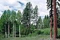 Glaze Meadow Deschutes National Forest (36951148881).jpg