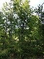 Glockenberg Sumpf sl2.jpg