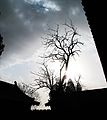 Gnarly tree (6240637824).jpg