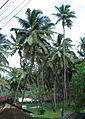Goa - Scenes (12).JPG