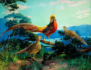 Golden Pheasants, a 1938 painting by John Henry Hintermeister. The digital image shows the painting as it exists today, including multiple signatures, added to make sure a signature was visible in lithographed calendar prints that were cropped from the original. Spots may be seen on the painting, which exist on the original.