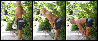 exercice musculation bras