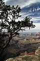 Grand Canyon (3696027995).jpg