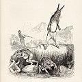 Grandville - Fables de La Fontaine - 02-14 . Le Lièvre et les Grenouilles.jpg