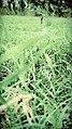 Grass B.jpg