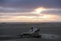 Grayland Beach State Park (33475037010).jpg