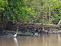 Great Egret (13970782689).jpg