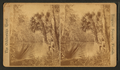 Grecian Bend. B, from Robert N. Dennis collection of stereoscopic views.png