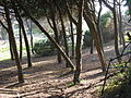 Guincho Portugal 03.jpg