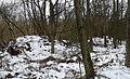 Hüttenwald Hügel (3).jpg