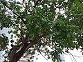 HK Central City Hall 愛丁堡廣場 Edinburgh Place 香港大會堂紀念花園 Memorial Garden trees Dec 2018 SSG 16.jpg