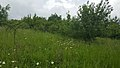 Habitat alongside the A10 in Hertfordshire (41937304325).jpg