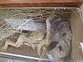 Hai Bar Yotvata Nature Reserve 32.jpg