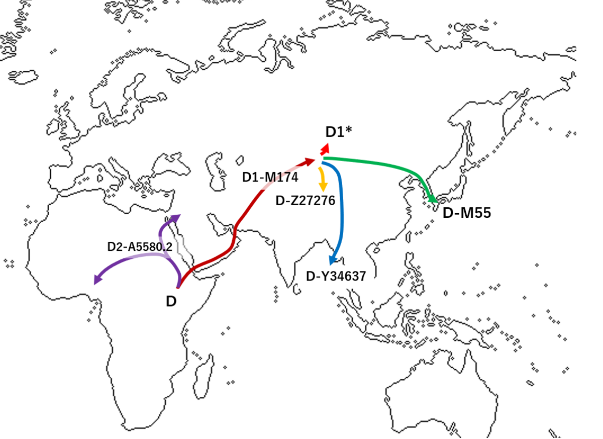 haplogroup d-m15