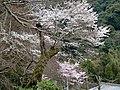 Hasedera Temple 長谷寺 - panoramio (5).jpg