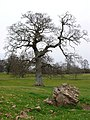 Hazelgrove House Park - geograph.org.uk - 708824.jpg