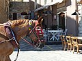 Head of carriage horse in Chania, Creta 08.jpg
