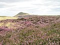 Heather, Balharvie Moss - geograph.org.uk - 536193.jpg