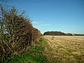Hedgerow, wood and oil barrel - geograph.org.uk - 660265.jpg