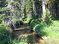 Hell Roaring Creek Sawtooth NRA.JPG