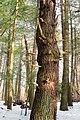 Henry's Woods (Revisit) (1) (12867358663).jpg