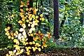 Herbst im Park - Blätter, Bäume, Seeufer und Wege im Wandel der Jahreszeiten. (1).jpg