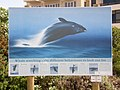Hermanus Whale Sign - panoramio (1).jpg