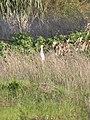 Herzliya Park - winter pondDSCN5486.JPG