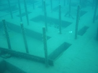 SS Hesper - A section of several long bolts on the ceiling, presumably used to mount the engine.