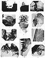 Holm Eurypterus Fischeri plate 8.jpg
