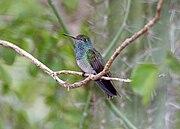 Honduran Emerald 2495402213.jpg