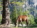 Horse on the mountain.jpg