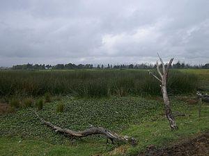Juan Amarillo River