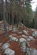 Hyypiönkallion näköalapaikka eli Välimetsän luoteiskulma, Liesjärven kansallispuisto, Tammela, 15.11.2014.JPG