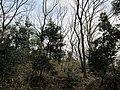 Ida-yama forest , Kawasaki - panoramio - Kaz Ish (2).jpg