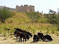 Ile d'Aswan - panoramio (3).jpg