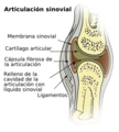 Illu synovial joint.es.png