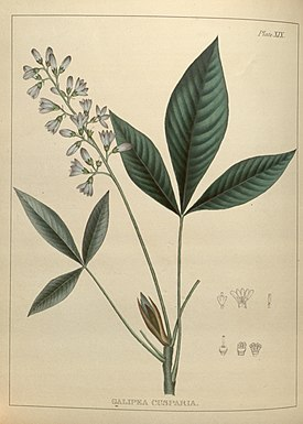 Illustrations of medical botany (Plate XIX) (7929221932).jpg
