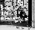 Ingresso principale del Castello Sforzesco con i suoi piccioni.jpg