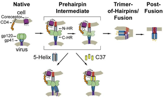 Entry inhibitor - An illustration of HIV entry mechanism and mechanisms of action (MOA) of two entry inhibitor, 5-Helix and C37.