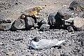 Islas Galápagos01.jpg