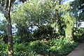 Jardín San Michele Anacapri 41.JPG