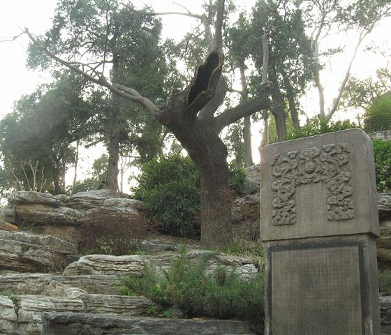 suicide tree of the Chongzhen emperor in the Jingshan Park